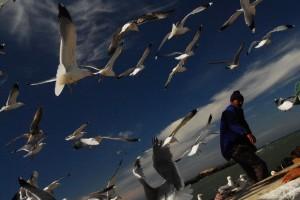seagulls-734837